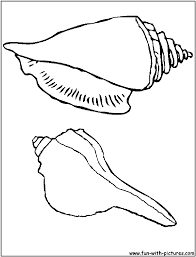 seashells colouring pages seashell coloring pages prints