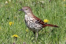 North Carolina wildlife tours images North carolina birds during focus on nature tours jpg