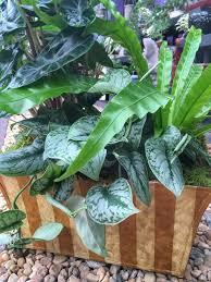 How To Arrange Indoor Plants by Design Ideas For Arranging Indoor Plants Triangle Gardener Magazine