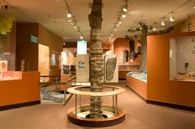 extinct monsters art history and science of museum paleontology a callixylon trunk was a focal point in hall 4 photo by chip clark