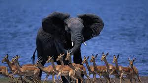 elephant baby elephant africa savanna hd wallpaper zoomwalls hd