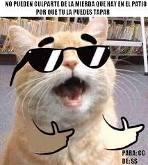 Gato Meme - cu磧nto cabr祿n 眇c祿mo culpar祗as un gato