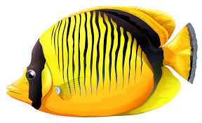 yellow butterfly fish png clipart best web clipart