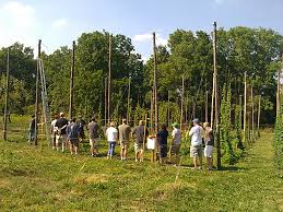 mccollum orchards our first hop harvest a cascade of fun