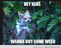 Funny Memes About Weed - funny memes weed