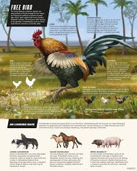 Hawaii wild animals images When chickens go wild nature news comment jpg