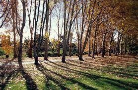 a walkway of poplar trees cast shadows photograph by jason edwards