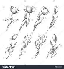 Image Of Spring Flowers by Set Spring Flowers Tulips Branches Pencil Stock Vector 259657598