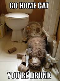 Drunk Cat Meme - go home cat youre drunk meme guy