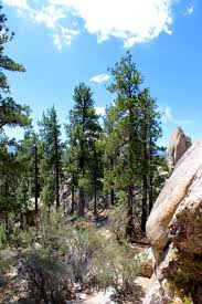 holcomb valley campground best campsites in big bear big bear