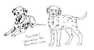 draw dalmatian step step arcmel
