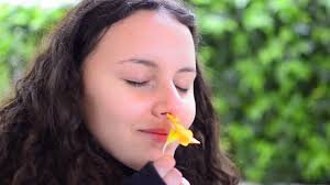 beautiful teen smelling yellow flower in stock video footage