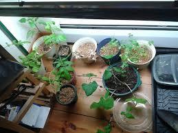 how to grow indoor herb garden ideas
