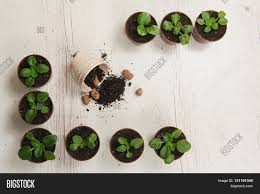 sprouts indoor plants pots image u0026 photo bigstock