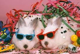 rabbit party happy birthday rabbits general stewoo net beck forum