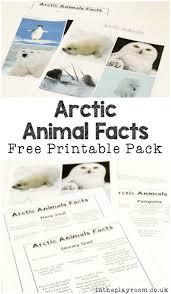 25 best polar bear facts ideas on pinterest polar bears for