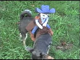 Cowboy Dog Costume Halloween Dog Halloween Costumes Rider Cowgirl Costume
