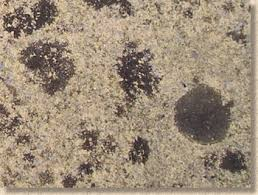 Cleaning Concrete Patio Mold Pavingexpert Dealing With Lichens