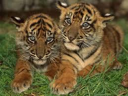 Desktop Hd Free Pictures Animals Baby Animal Wallpapers Free Wallpaper Wiki