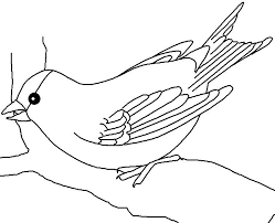 oregon state bird coloring page