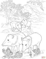 javelina peccaries wild pigs coloring page free printable