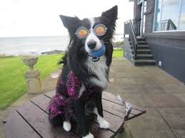 scary halloween borders scary halloween dog in scary glasses sitting pretty in halloween