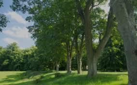 landscape and environment althorp estate