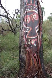 native plants western australia 16 best perth plants images on pinterest perth western