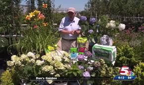 Flowers In Bismarck Nd - dan u0027s garden hydrangeas and day lilies
