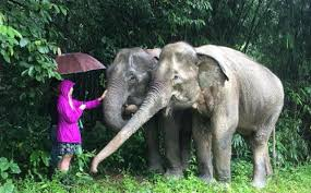The Blind Men And The Elephant Analysis Phuket U0027s Nikki Beach Let Drunk Tourists Ride Baby Elephant Telegraph