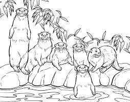 otter coloring pages coloring pages otters