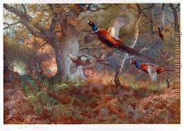 paintings on wood for sale archibald thorburn pheasants through the oak wood painting anysize
