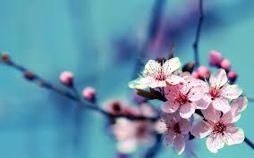 Beutifull 44 Beautiful Flowers Wallpapers