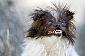 Ugliest 2014 World U0027s Ugliest Dog Contest