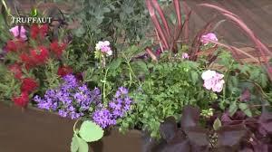 fleurs vivaces rustiques idée de jardinière pour balcon ensoleillé plantes de plein