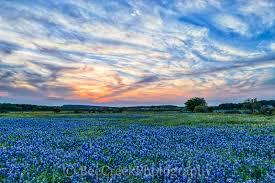 heavenly bluebonnet sunset bee creek photo