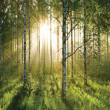 Wall Mural Forest Sunrise Wall 1 Wall Giant Wallpaper Mural Forest 3 15m X 2 32m