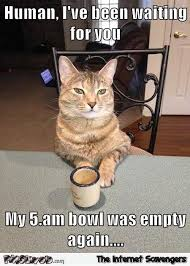 Internet Meme Cat - human i ve been waiting for you cat meme pmslweb
