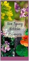 Where To Buy Edible Flowers - 62 best edible flowers images on pinterest