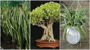 plant for bedroom 11 plants for your bedroom to help you sleep better youtube