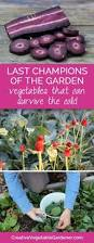 9600 best winter gardening images on pinterest winter garden