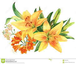 yellow lily flower watercolor bouquet stock illustration image