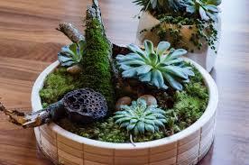 living art plants for decorations chicago coach house plants
