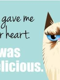 grumpy cat valentines s day cards of the grumpy cat others