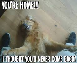 Welcome Home Meme - 142 best funny dogs images on pinterest funny pics funny animals