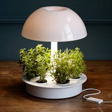 Plants That Dont Need Light Long Distance Touch Lamp Touch Light Led Lights Uncommongoods