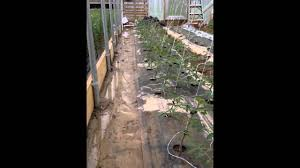 high tunnel trellis lower and lean youtube