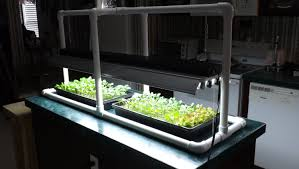hydroponic seed starting u0026 simple pvc grow light stand youtube