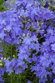 10 flowers for beautiful hanging baskets delphinium grandiflorum