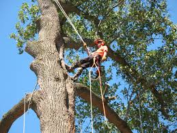 services ed s tree service landscaping